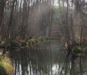 The Marais in mist